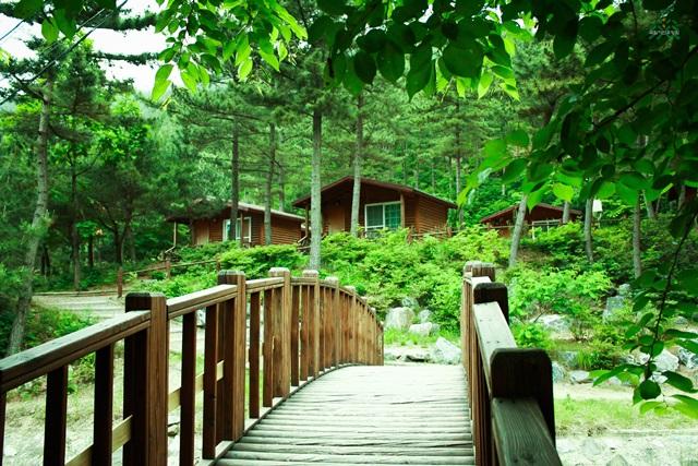 여름휴가 보내기 좋은 국립자연휴양림 10곳
